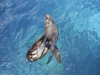 Fotoreise Galapagos Inseln Stefano Paterna_12.jpg