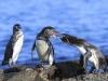 Fotoreise Galapagos Inseln Stefano Paterna_16.jpg