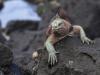 Fotoreise Galapagos Inseln Stefano Paterna_2.jpg