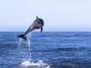 Fotoreise Galapagos Inseln Stefano Paterna_3.jpg