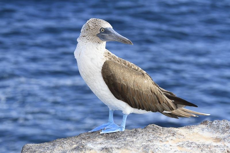 Fotoreise Galapagos Inseln
