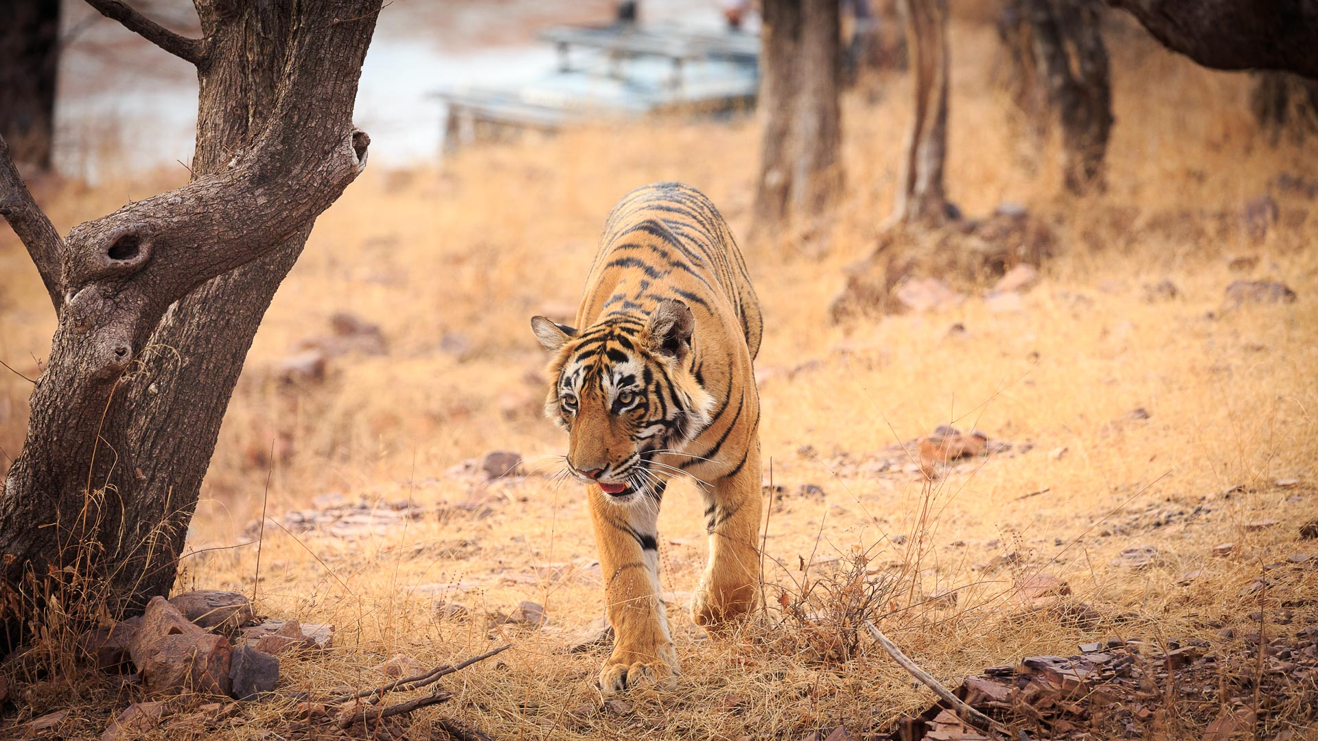 Fotoreise-Indien