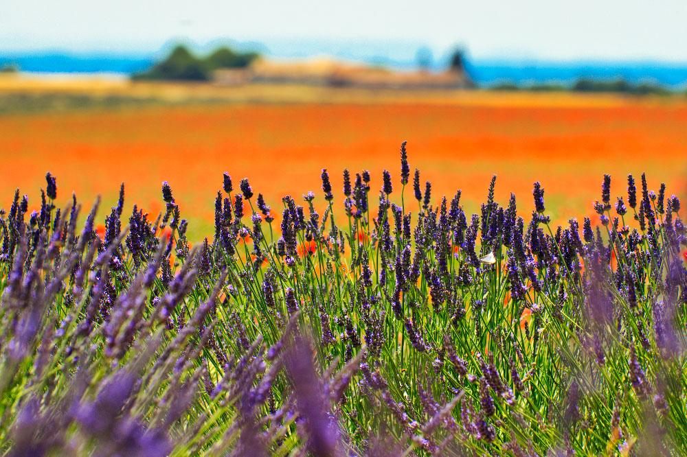 Fotoreise Provence 2019 Teilnehmerfotos