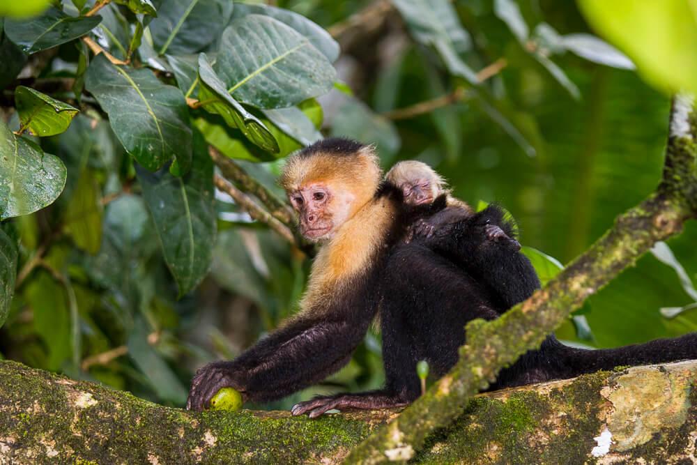 Fotoreise Costa Rica mit Stefano Paterna