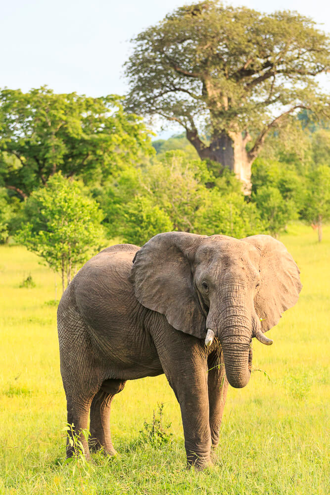 fotoreise-botswana